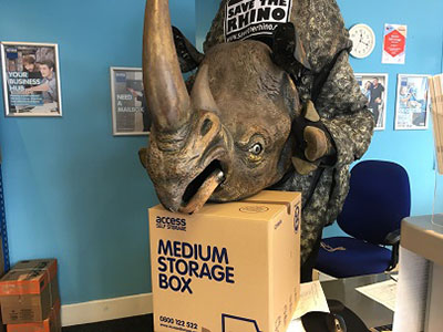 Rhino costume head on top of a medium storage box