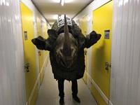 Rhino walking down Access corridor