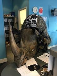 Rhino in Access office