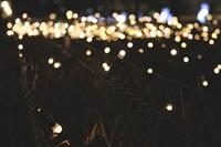 Christmas at Kew fairy lights