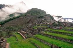 South America fields