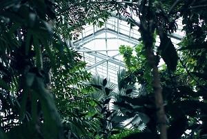 trees in building atrium