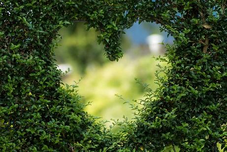 tidy hedge with heart shaped hole