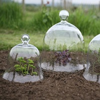 glass cloche as a mini greenhouse