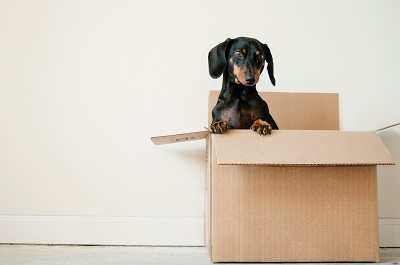 Moving home? Here's the ultimate checklist of essential things you need for a new house.