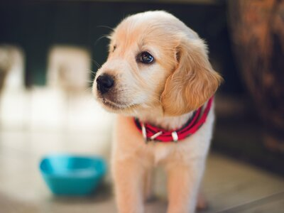 How to puppy proof your house